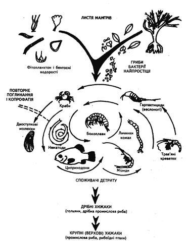 Детритний харчовий ланцюг